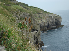 Durlston Head
