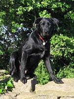 Widget - Park Dog